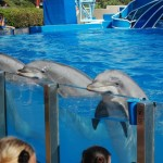 Blue Horizons Dolphin Show
